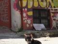 istanbul-urlaub (38)