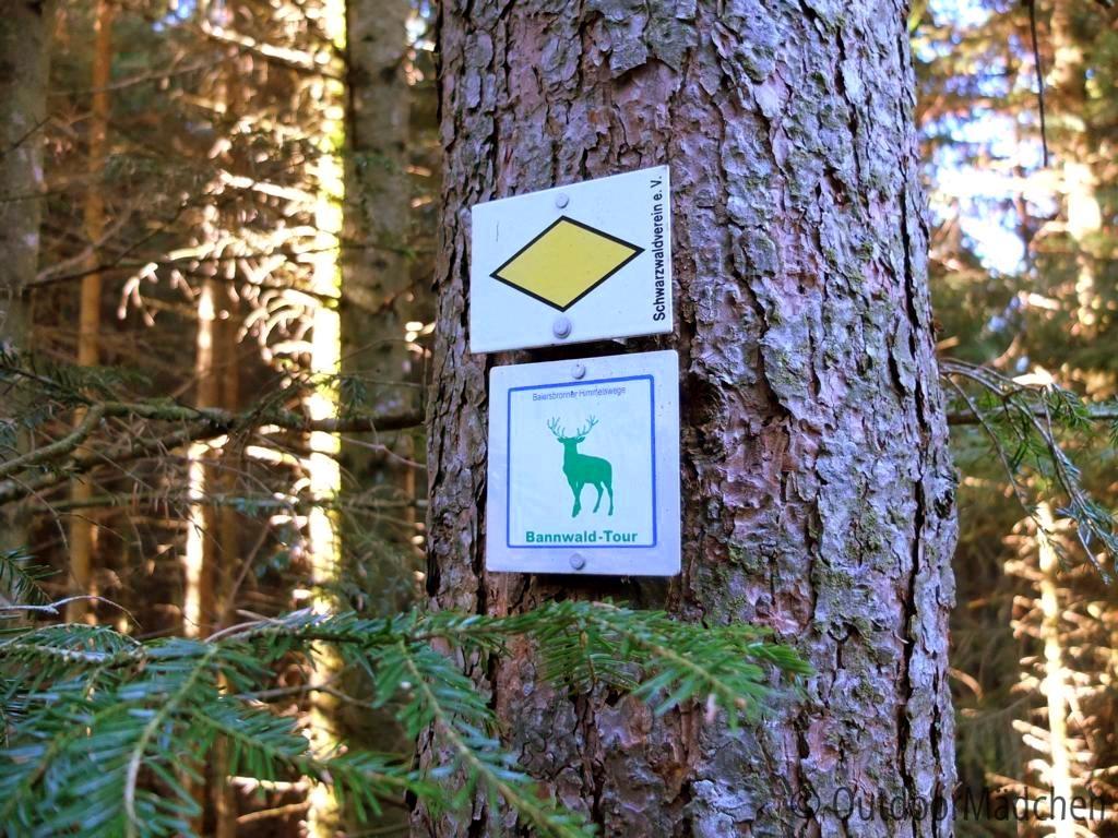 bannwald-tour-schwarzwald (2)