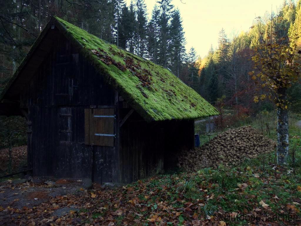 bannwald-tour-schwarzwald (22)