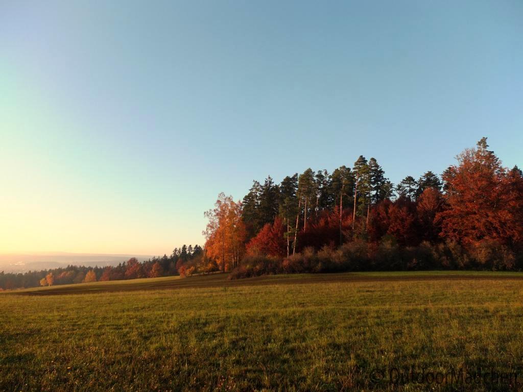 bannwald-tour-schwarzwald (24)