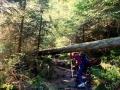 bannwald-tour-schwarzwald (10)