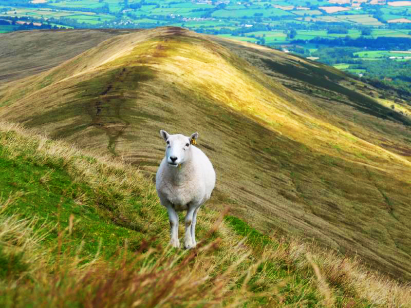 Wanderung-Wales-Brecon-Beacons-Hufeisen-outdoormaedchen-18