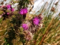 Wanderung-Wales-Brecon-Beacons-Hufeisen-outdoormaedchen-22