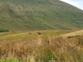 Wanderung-Wales-Brecon-Beacons-Hufeisen-outdoormaedchen-31