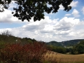 Wanderung-Brombeer-Pfade-bei-Essen-NRW-13