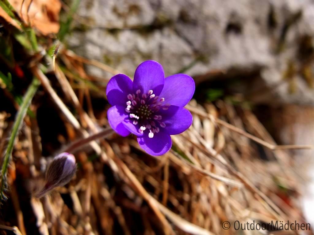 klettersteig-che-guevara-gardasee-outdoormaedchen (6)