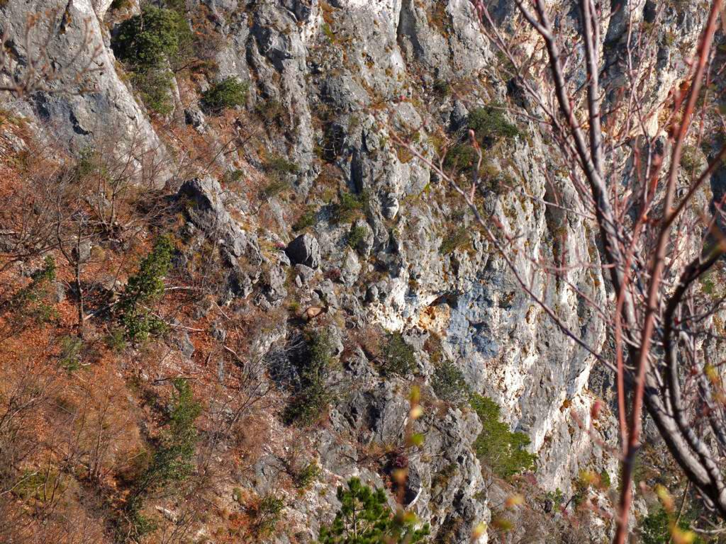 klettersteig-runde-cima-rocca-gemse