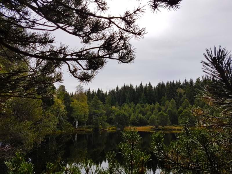 E-MTB-und-Wanderung-Blindensee-Schwarzwald-outdoormaedchen (12)