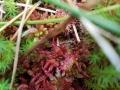 E-MTB-und-Wanderung-Blindensee-Schwarzwald-outdoormaedchen (10)