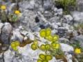 ellmauer-tor-wanderung-outdoormaedchen (3)