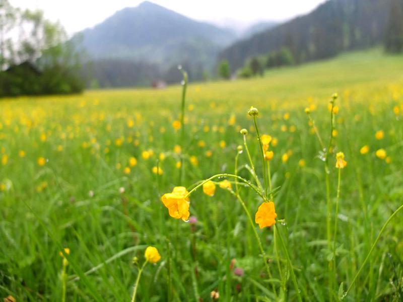 Hüttentour-Tannheimer-Berge-5