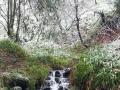 Wanderung-Sauerland-Kahler-Asten (13)