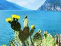 leichte-wanderung-monte-brione-kaktus