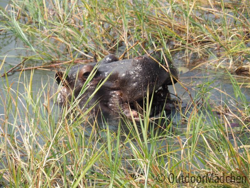 Nilpferd-Okavango