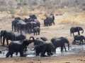 Elefanten-Namibia-Tierwelt