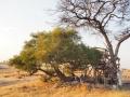 Aussichtspunkt-Namibia-Khaudum-Nationalpark
