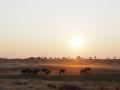 Elefanten-Sonnenuntergang-Namibia