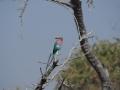 Namibia-Vogel-Tierwelt