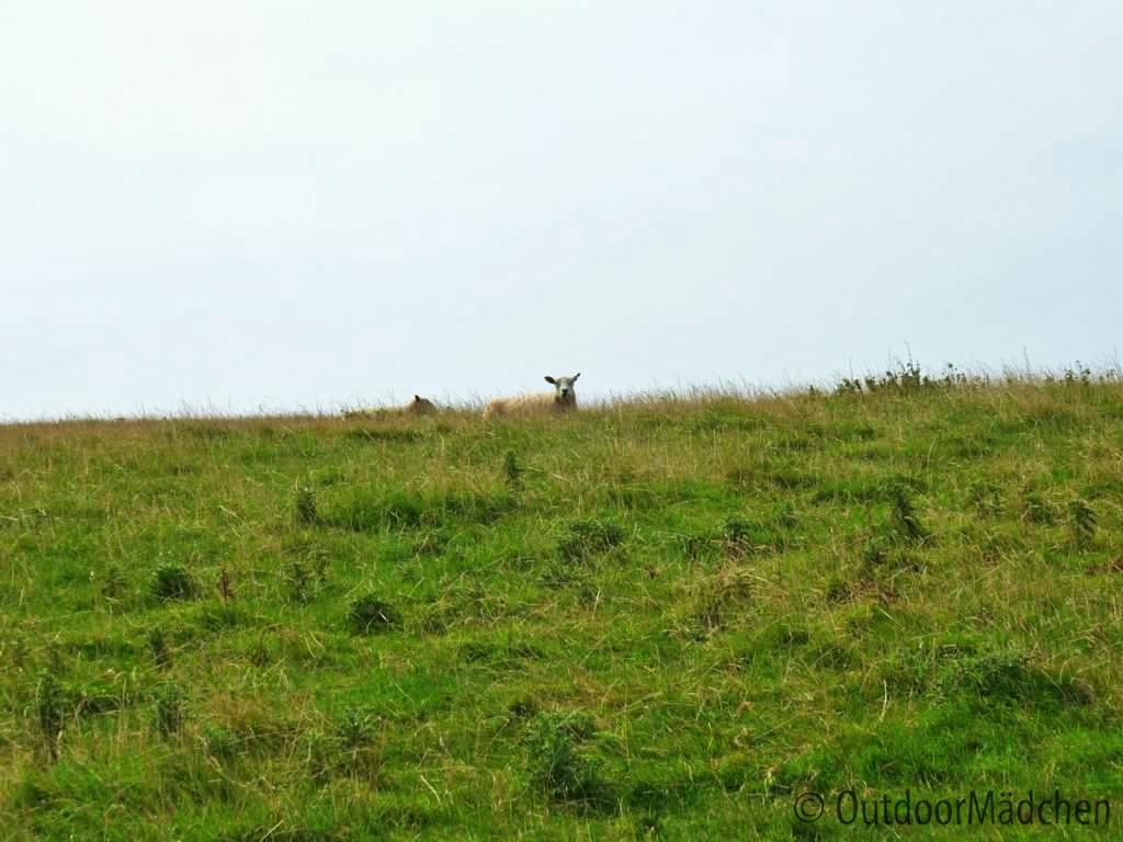 Pembrokeshire-Coast-Path-St-Davids-Wales (10)