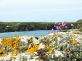 Pembrokeshire-Coast-Path-St-Davids-Wales (12)
