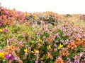 Pembrokeshire-Coast-Path-St-Davids-Wales (18)