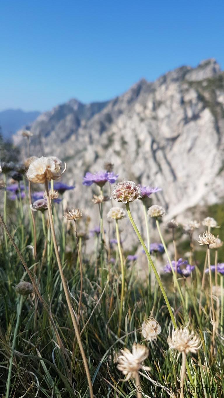 Wanderung-Punta-Larici-Gardasee-12