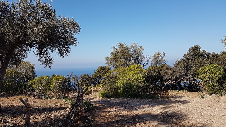 einfache-Wanderung-Sa-Foradada-Mallorca-2