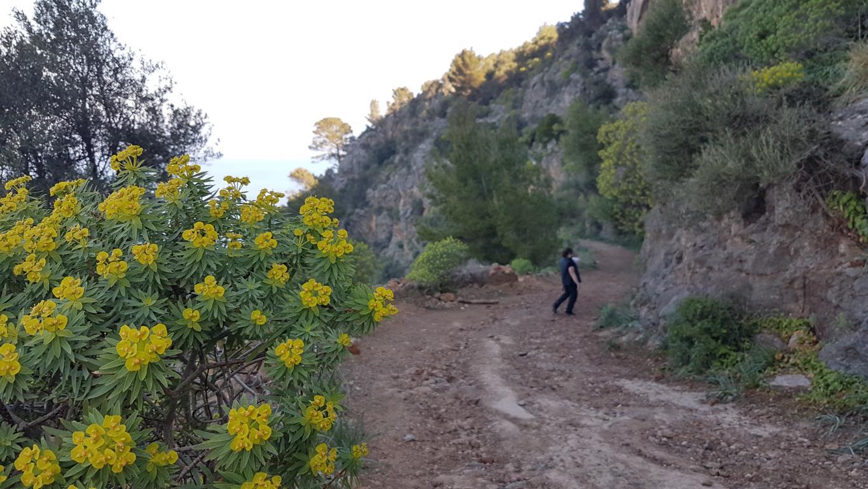 einfache-Wanderung-Sa-Foradada-Mallorca-3