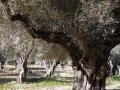 einfache-Wanderung-Sa-Foradada-Mallorca-14