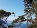 einfache-Wanderung-Sa-Foradada-Mallorca-5