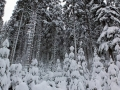 Winterwanderung-Sankenbachsee-Schwarzwald (3)