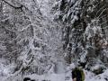 Wanderung-Schwarzwald-Schweinbachtal (10)