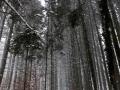Wanderung-Schwarzwald-Schweinbachtal (12)