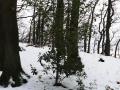 Wanderung-Drachenfels-Siebengebirge-Wald