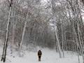 Wanderung-Drachenfels-Winter-Wald