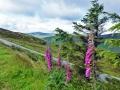 wicklow-way-irland-outdoormaedchen (29)