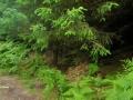 wicklow-way-irland-outdoormaedchen (3)
