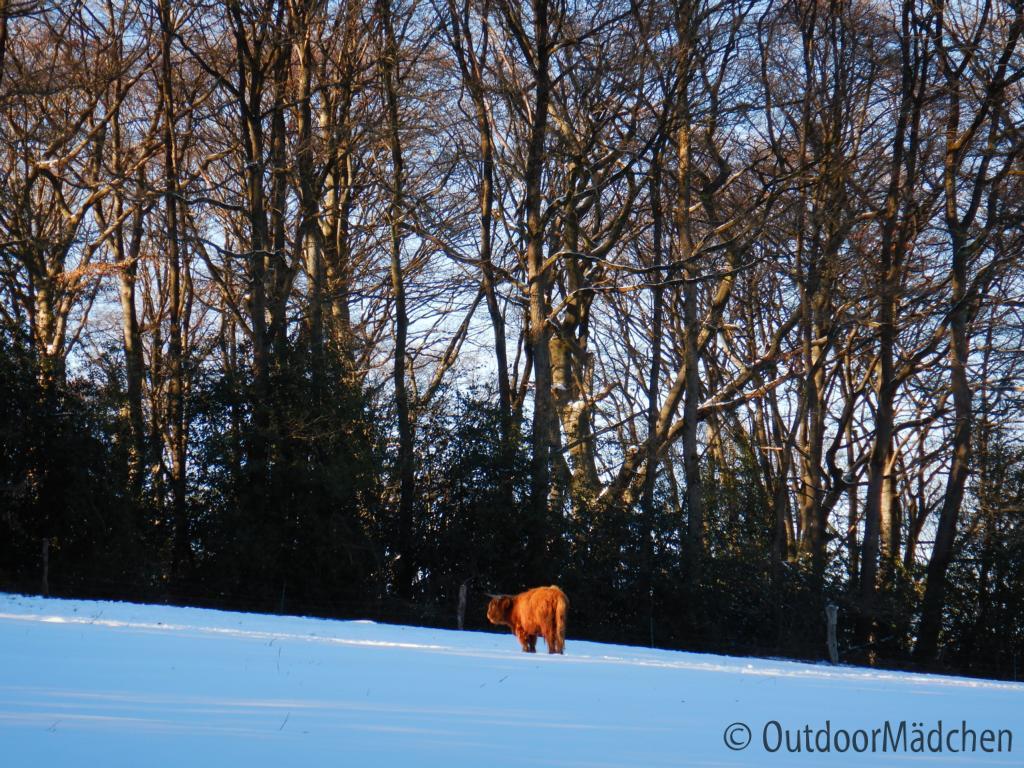 Winter-wanderung-Elfringhauser-Schweiz-Hattingen-5
