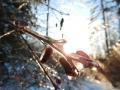 Winter-wanderung-Elfringhauser-Schweiz-Hattingen-19