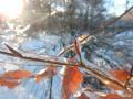 Winter-wanderung-Elfringhauser-Schweiz-Hattingen-4