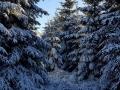 Winterwanderung-Sauerland-Clemensberg-Langenberg-Outdoormaedchen (5)
