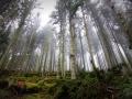 AugenBlick-Wanderung-Calw-Schwarzwald (10)