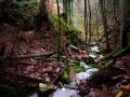 Xanderklinge-Schluchtenwanderung-Schwarzwald (14)