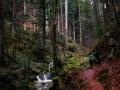 Xanderklinge-Schluchtenwanderung-Schwarzwald (2)