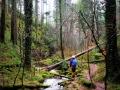 Xanderklinge-Schluchtenwanderung-Schwarzwald (3)